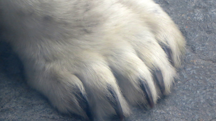 Mikawoz Polar Bear Claw