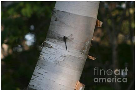 Mikawoz Dragonfly on Tree