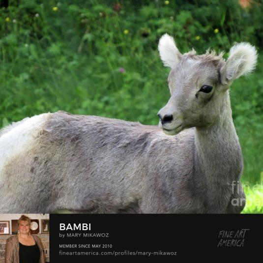 Mikawoz Bambi